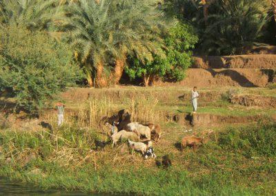 Nil, berge